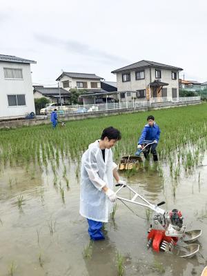 雨の中、雑草の除去作業を行う様子